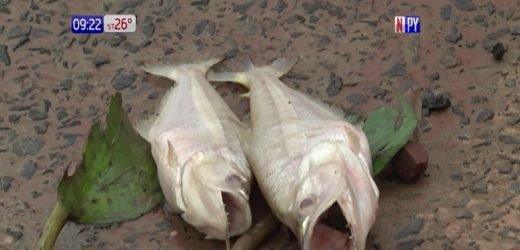 Faltan recursos para investigar mortandad de peces