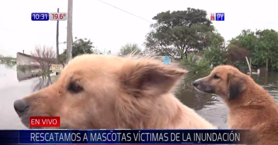 Rescatamos a perritos víctima de inundación