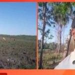 Ganaderos de la zona de Correa Ruguá, habrían sido estafados por menonita