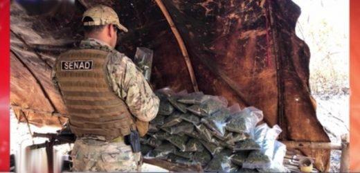 Desmantelan 22 campamentos narco en Amambay