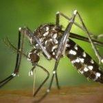 Salud alerta sobre posible gran epidemia de dengue