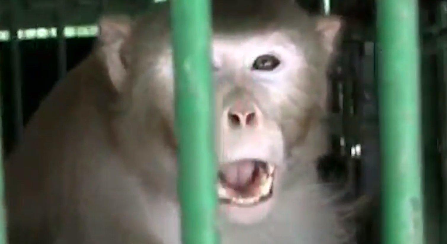 Mono alcohólico mata a niña y causa pánico en una pequeña región de la India