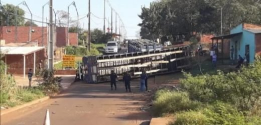 Pedro Juan: Camión que transportaba casi 50 ganados vuelca