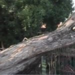 Árbol cae y destruye techo de una escuela