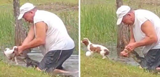 Rescató a su cachorro de las fauces de un cocodrilo