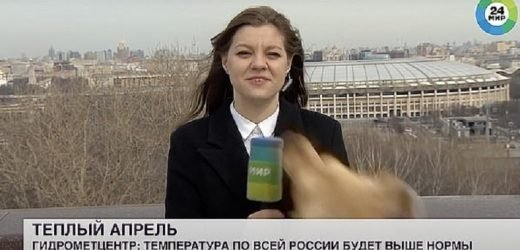 El terror de los cronistas: Perro se roba micrófono en vivo